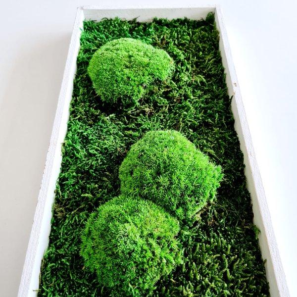 Moosbild Wald- und Kugelmoos gemischt, 60x20x4 cm, white shabby chic, Aufhängung ohne bohren