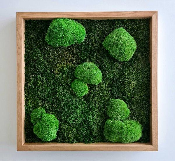 Moosbild Wald- und Kugelmoos gemischt, 50x50x4 cm, Holzrahmen in Eiche massiv