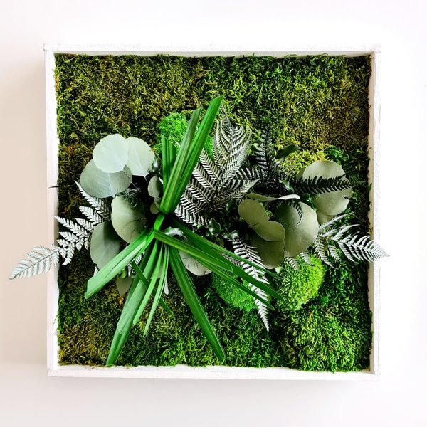 Pflanzenbild: Pflanzeninsel 40x40 cm
