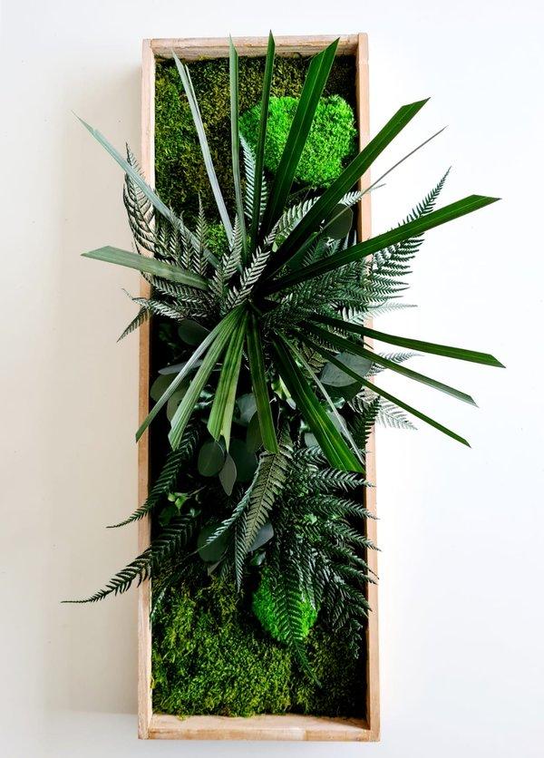Pflanzenbild: Pflanzeninsel 60x20 cm