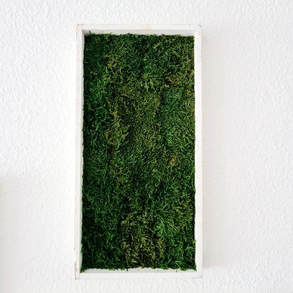 Waldmoosbild 40x20x4 cm, shabby chic, Aufhängung ohne bohren
