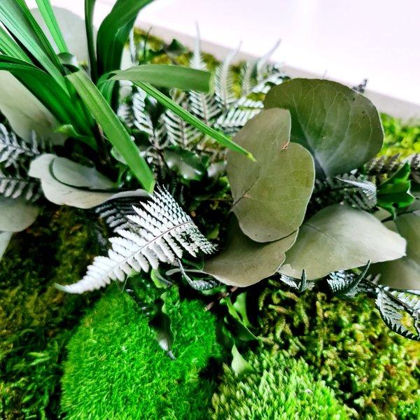 Pflanzen- und Moosbildmodul 5-tlg. (erweiterbar)