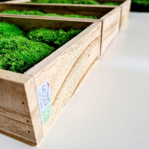 Kugelmoosbild: Set 3 Stk., 35x15x5 cm, Holzrahmen geflammt, Aufhängung ohne bohren