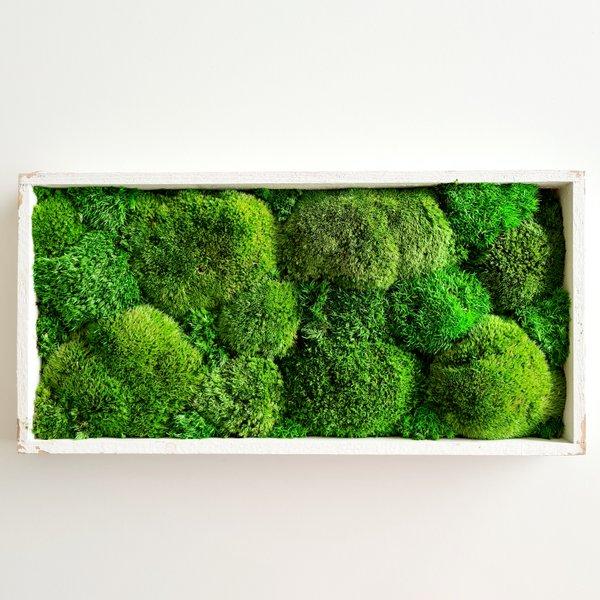 Moosbild Wald- und Kugelmoos gemischt 40x20x4 cm, shabby chic, Aufhängung ohne bohren